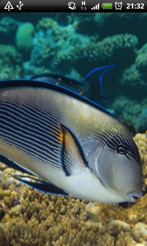 Free Acer Liquid E2 V370 Red Sea Fish Live Wallpaper