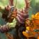 World of Warcraft Live Wallpaper 3