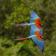 Nice Birds Live Wallpapers