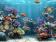 Aquarium Clownfish