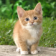 1047 Cats Wallpapers