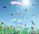 Butterflies in the sun