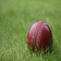 CricketFacts