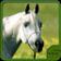 Horse Breeds & Pony Quiz HD