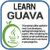 Learn Guava v2