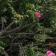 Moomettes Magnificents Blog