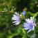 Flowers2livewallpaper