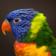 Faces of Birds