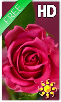 Free Nokia X2 Dual Sim Rose Love Live Wallpaper Software Download